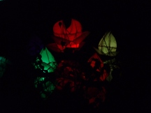 Lanterns on Mansion Pond2