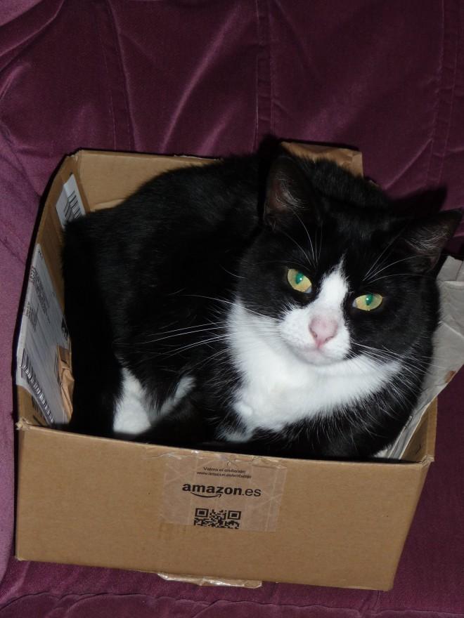Pepsi in a box